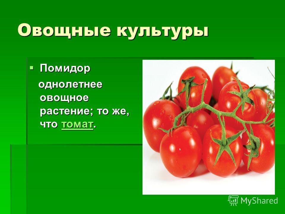 Овощные культуры помидор однолетнее