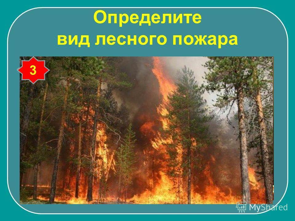 Определите вид лесного пожара 1 2 3