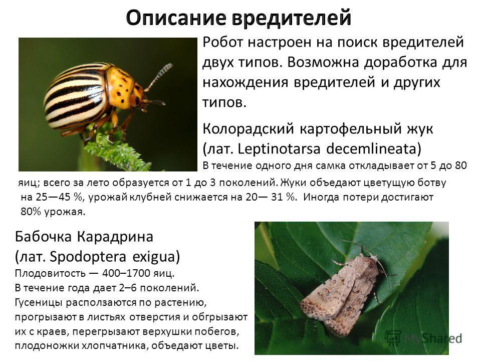 Робот настроен на поиск вредителей двух типов. Возможна доработка для нахождения вредителей и других типов. Колорадский картофельный жук (лат. Leptinotarsa decemlineata) В течение одного дня самка откладывает от 5 до 80 Бабочка Карадрина (лат. Spodop