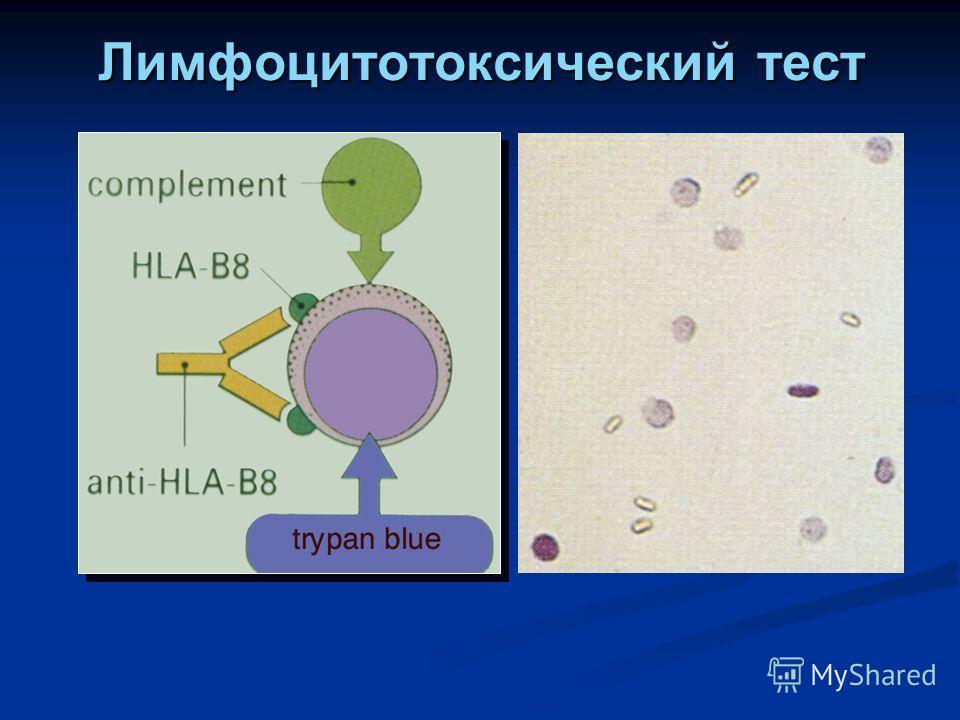 Лимфоцитотоксический тест
