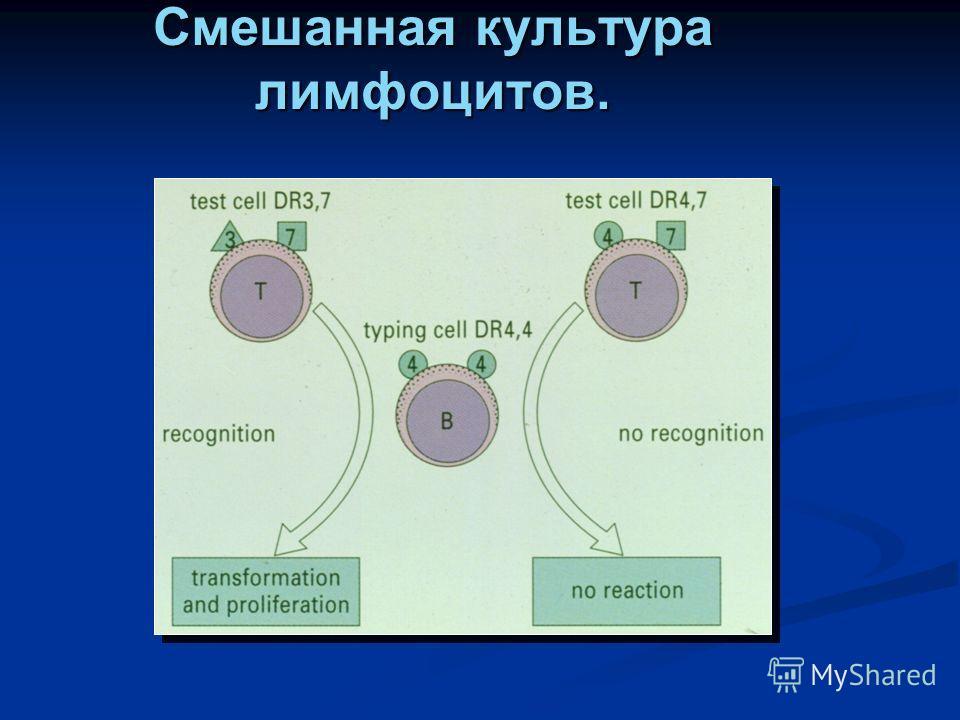 Смешанная культура лимфоцитов.