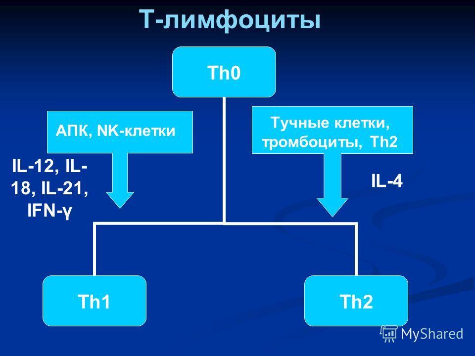 Тучные клетки, тромбоциты, Th2 АПК, NK-клетки IL-12, IL- 18, IL-21, IFN-γ IL-4 Т-лимфоциты