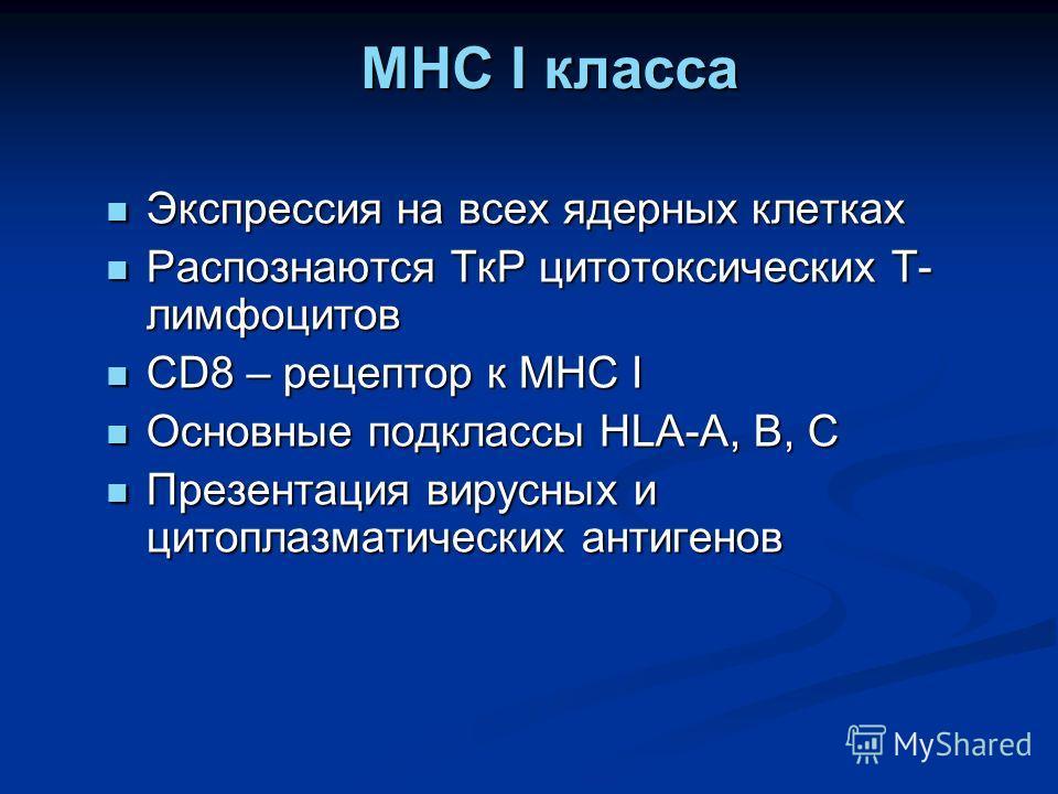 MHC I класса MHC I класса Экспрессия на всех ядерных клетках Экспрессия на всех ядерных клетках Распознаются ТкР цитотоксических Т- лимфоцитов Распознаются ТкР цитотоксических Т- лимфоцитов CD8 – рецептор к MHC I CD8 – рецептор к MHC I Основные подкл