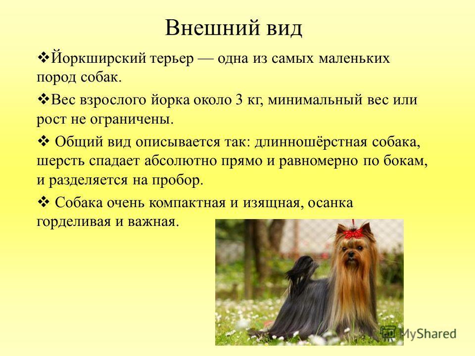 Внешний вид Йоркширский терьер одна из самых маленьких пород собак. Вес взрослого йорка около 3 кг, минимальный вес или рост не ограничены. Общий вид описывается так: длинношёрстная собака, шерсть спадает абсолютно прямо и равномерно по бокам, и разд