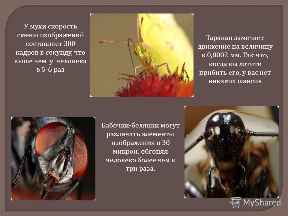У мухи скорость смены изображений составляет 300 кадров в секунду, что выше чем у человека в 5-6 раз Бабочки - белянки могут различать элементы изображения в 30 микрон, обгоняя человека более чем в три раза. Таракан замечает движение на величину в 0,
