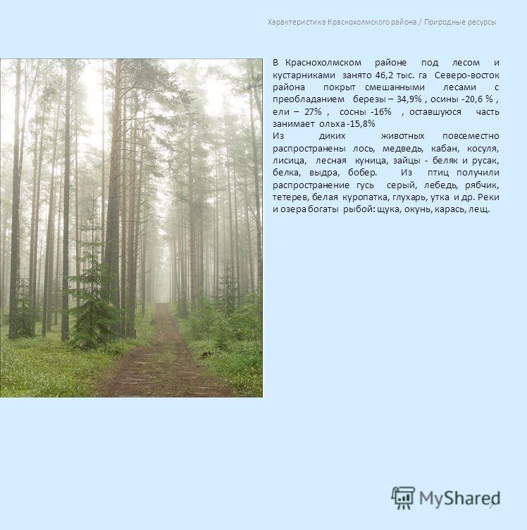 В Краснохолмском районе под лесом и кустарниками занято 46,2 тыс. га Северо-восток района покрыт смешанными лесами с преобладанием березы – 34,9%, осины -20,6 %, ели – 27%, сосны -16%, оставшуюся часть занимает ольха -15,8% Из диких животных повсемес