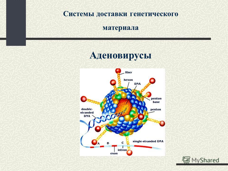 Системы доставки генетического материала Аденовирусы