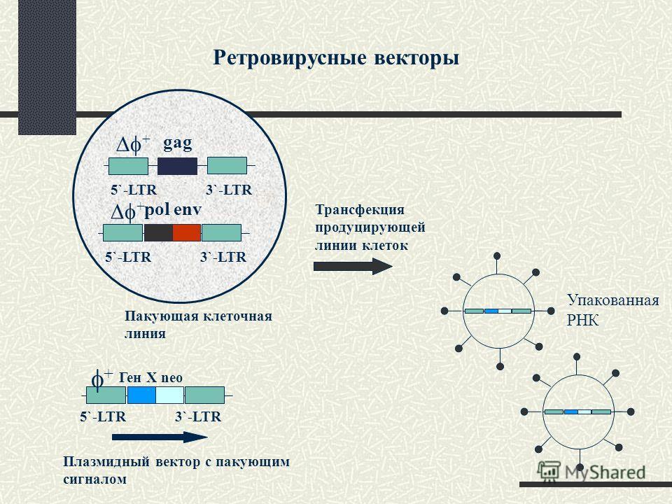 Ретровирусные векторы gag 5`-LTR 3`-LTR + pol env 5`-LTR 3`-LTR + Ген X neo Пакующая клеточная линия Плазмидный вектор с пакующим сигналом + Трансфекция продуцирующей линии клеток Упакованная РНК