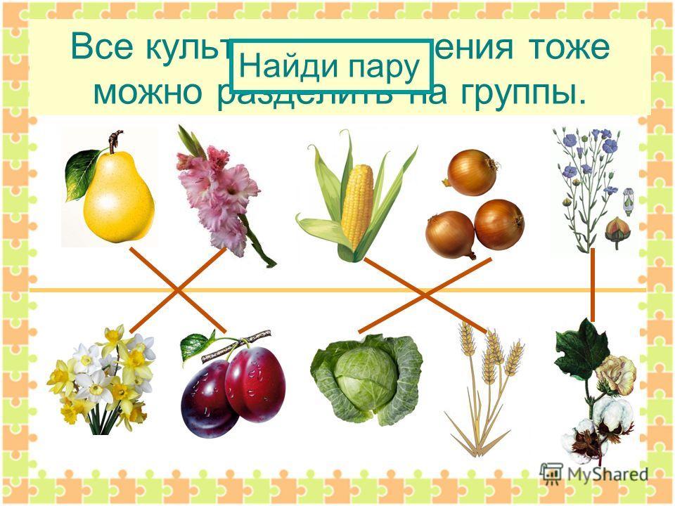 Презентация на тему Растения культурные и дикорастущие  10 Все культурные растения тоже можно разделить на группы Найди пару