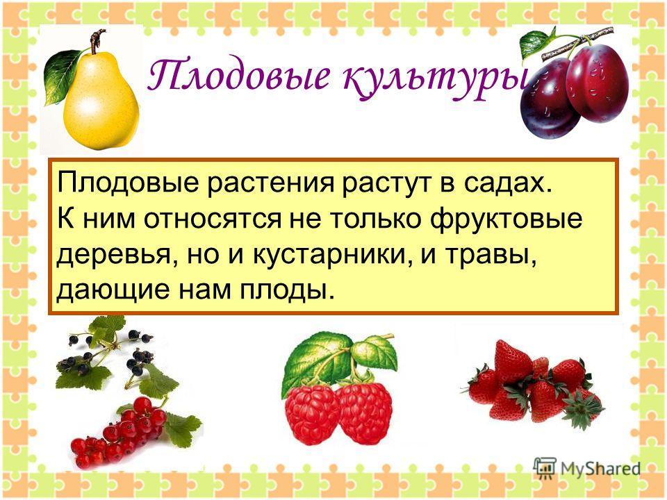 Плодовые культуры Плодовые растения растут в садах. К ним относятся не только фруктовые деревья, но и кустарники, и травы, дающие нам плоды.
