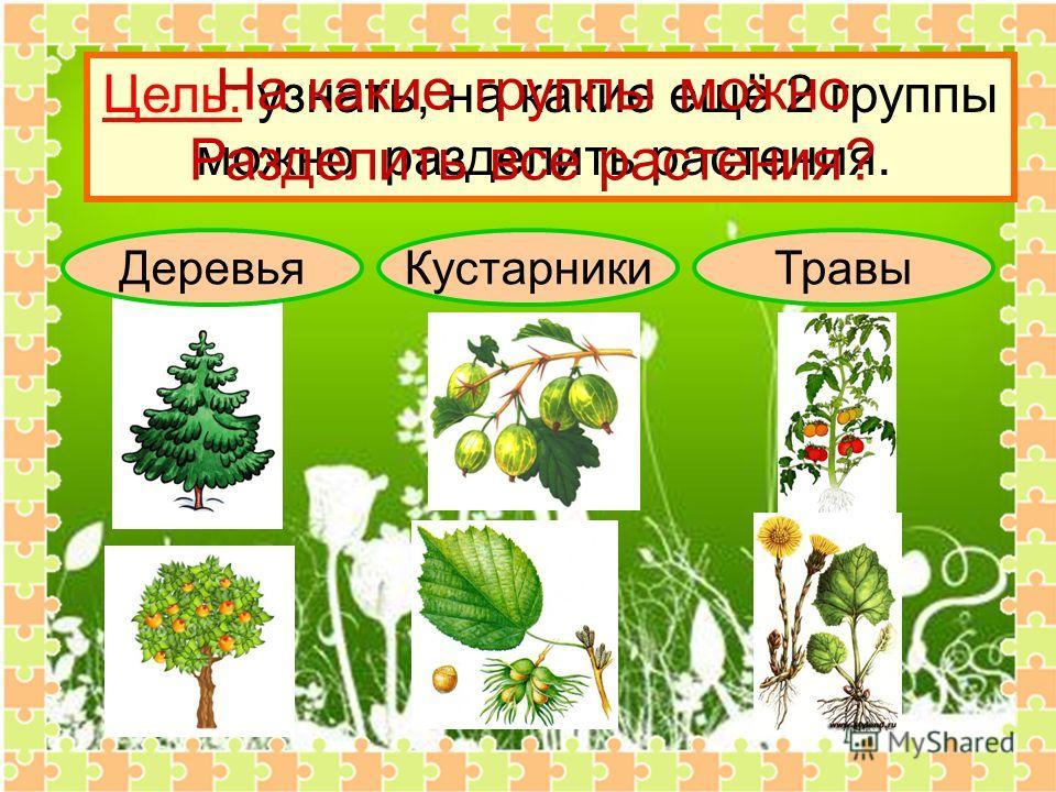 ДеревьяКустарникиТравы Цель: узнать, на какие ещё 2 группы можно разделить растения. На какие группы можно Разделить все растения?
