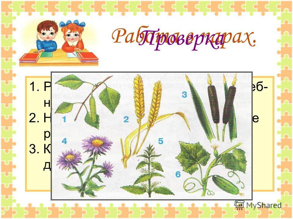 Работа в парах. 1. Рассмотрите рисунки на стр.62 учеб- ника. 2. Назовите друг другу изображённые растения. 3. Какие из них культурные, а какие дикорастущие? Проверка