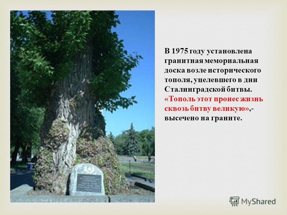 В 1975 году установлена гранитная мемориальная доска возле исторического тополя, уцелевшего в дни Сталинградской битвы. «Тополь этот пронес жизнь сквозь битву великую»,- высечено на граните.