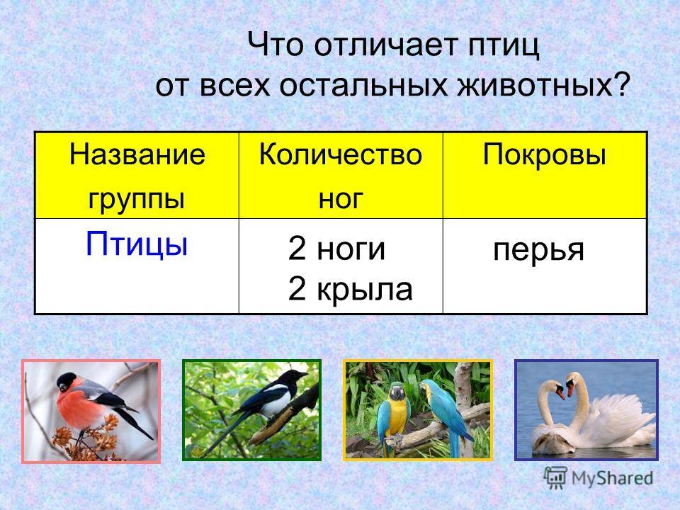 Что отличает птиц от всех остальных животных? Название группы Количество ног Покровы Птицы 2 ноги 2 крыла перья