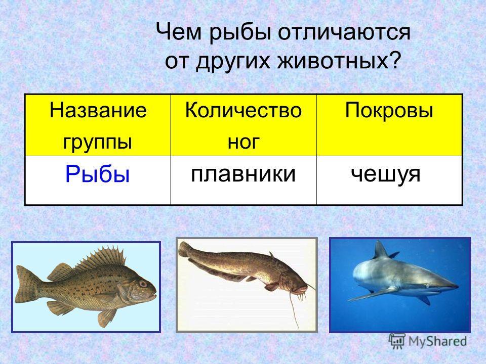 Чем рыбы отличаются от других животных? Название группы Количество ног Покровы Рыбы плавникичешуя