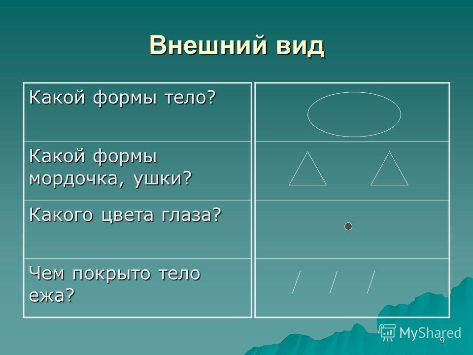 9 Внешний вид Какой формы тело? Какой формы мордочка, ушки? Какого цвета глаза? Чем покрыто тело ежа?
