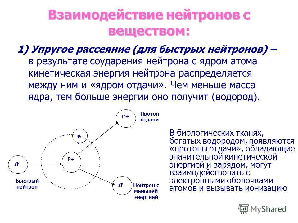 Взаимодействие нейтронов с веществом: 1) Упругое рассеяние (для быстрых нейтронов) – в результате соударения нейтрона с ядром атома кинетическая энергия нейтрона распределяется между ним и «ядром отдачи». Чем меньше масса ядра, тем больше энергии оно