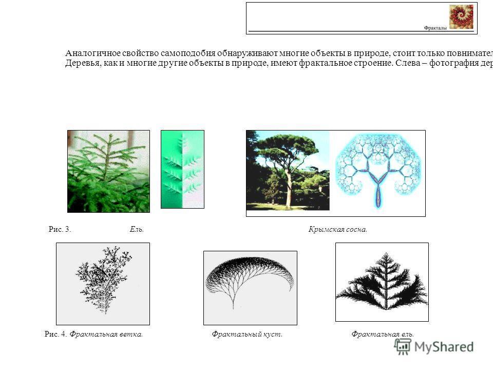 Аналогичное свойство самоподобия обнаруживают многие объекты в природе, стоит только повнимательнее присмотреться к ним: к линиям трещин в земной коре, ветвлениям деревьев, очертаниям гор, облаков и коралловых рифов. Деревья, как и многие другие объе