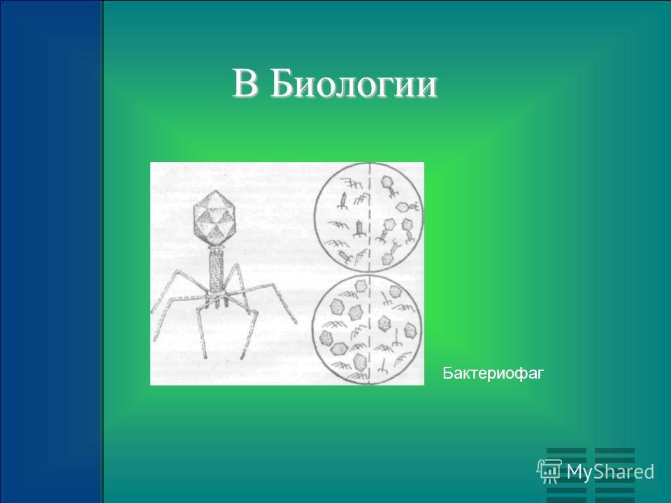 В Биологии Бактериофаг