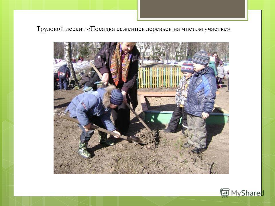Трудовой десант «Посадка саженцев деревьев на чистом участке»