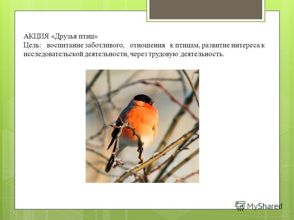 АКЦИЯ «Друзья птиц» Цель: воспитание заботливого, отношения к птицам, развитие интереса к исследовательской деятельности, через трудовую деятельность.