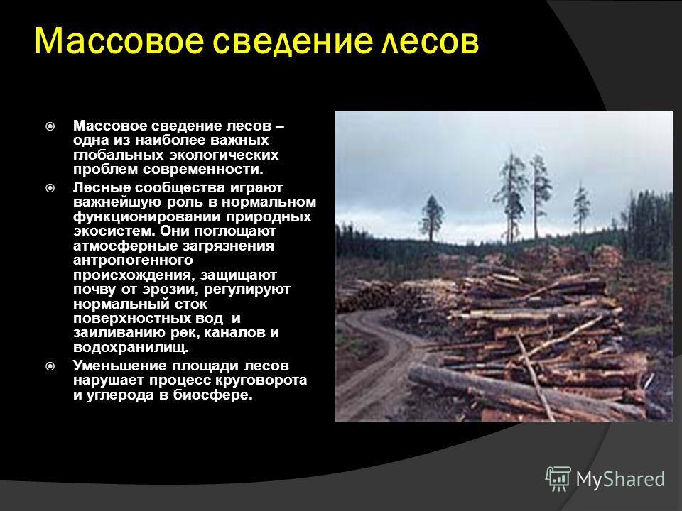 Массовое сведение лесов Массовое сведение лесов – одна из наиболее важных глобальных экологических проблем современности. Лесные сообщества играют важнейшую роль в нормальном функционировании природных экосистем. Они поглощают атмосферные загрязнения