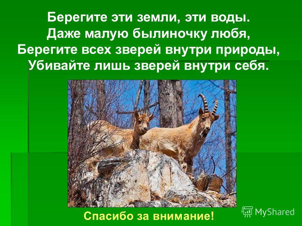 Берегите эти земли, эти воды. Даже малую былиночку любя, Берегите всех зверей внутри природы, Убивайте лишь зверей внутри себя. Спасибо за внимание!