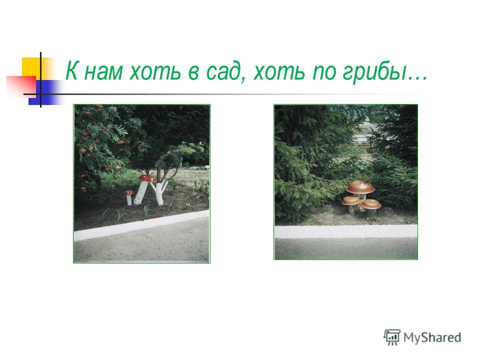 К нам хоть в сад, хоть по грибы…