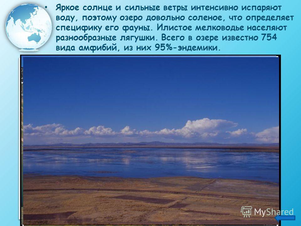 Яркое солнце и сильные ветры интенсивно испаряют воду, поэтому озеро довольно соленое, что определяет специфику его фауны. Илистое мелководье населяют разнообразные лягушки. Всего в озере известно 754 вида амфибий, из них 95%-эндемики.