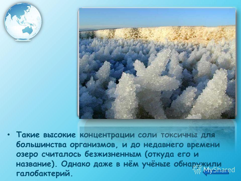 Такие высокие концентрации соли токсичны для большинства организмов, и до недавнего времени озеро считалось безжизненным (откуда его и название). Однако даже в нём учёные обнаружили галобактерий.