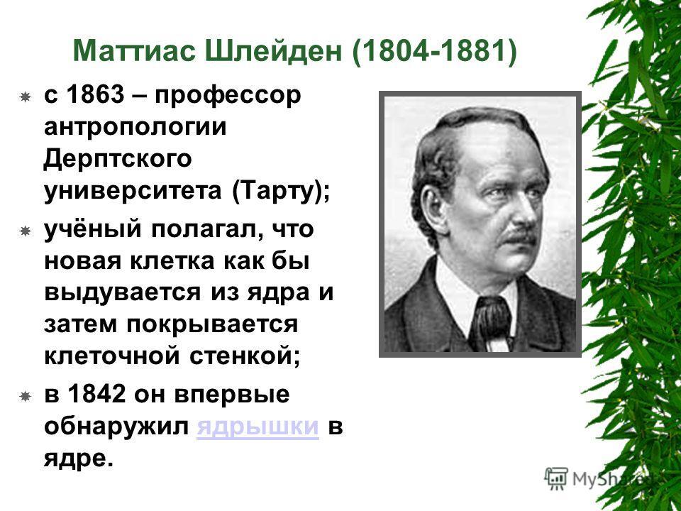 Маттиас Шлейден (1804-1881) с 1863 – профессор антропологии Дерптского университета (Тарту); учёный полагал, что новая клетка как бы выдувается из ядра и затем покрывается клеточной стенкой; в 1842 он впервые обнаружил ядрышки в ядре.ядрышки