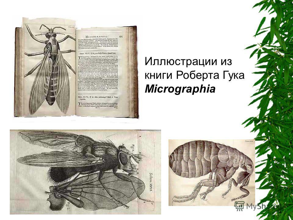 Иллюстрации из книги Роберта Гука Micrographia