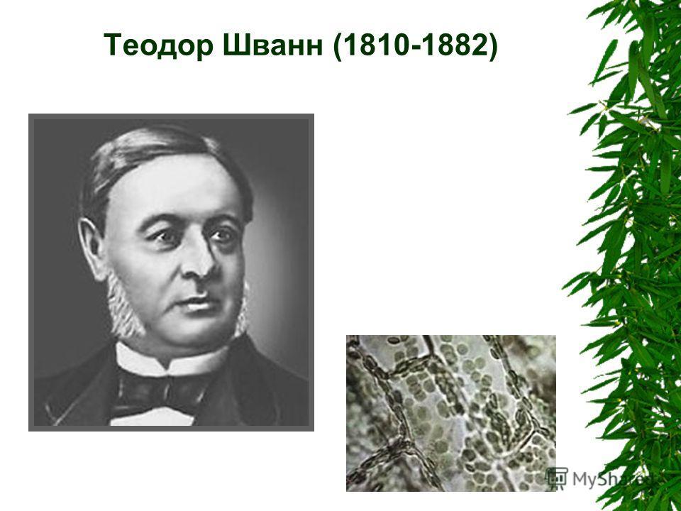 Теодор Шванн (1810-1882)