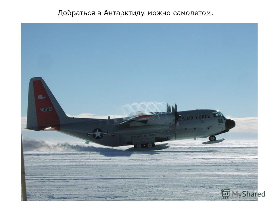 Добраться в Антарктиду можно самолетом.