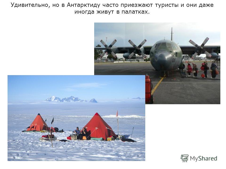 Удивительно, но в Антарктиду часто приезжают туристы и они даже иногда живут в палатках.