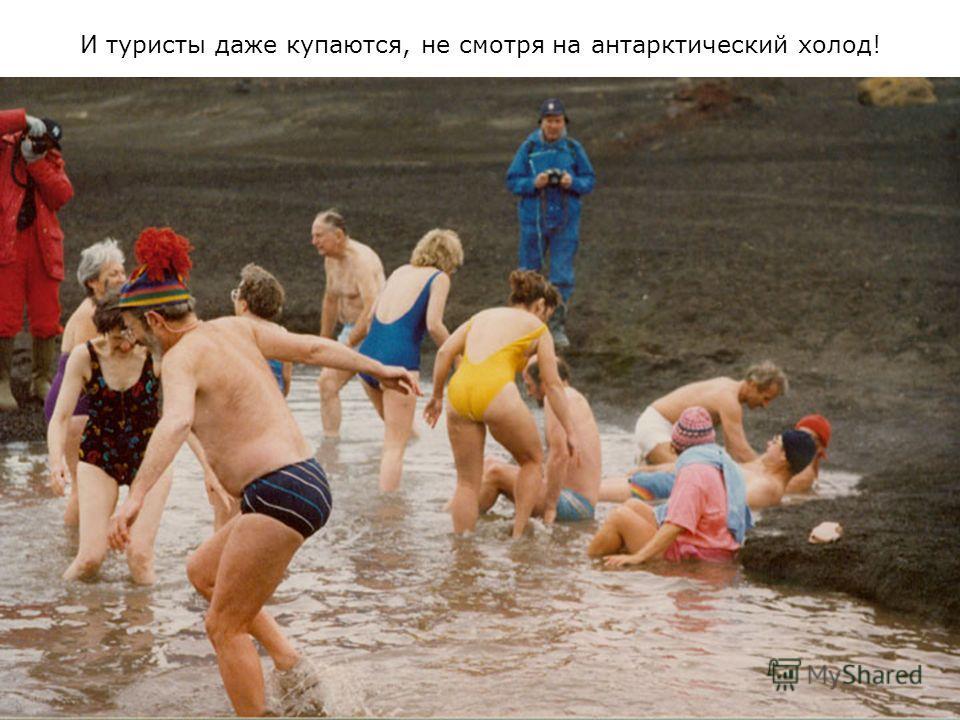 И туристы даже купаются, не смотря на антарктический холод!
