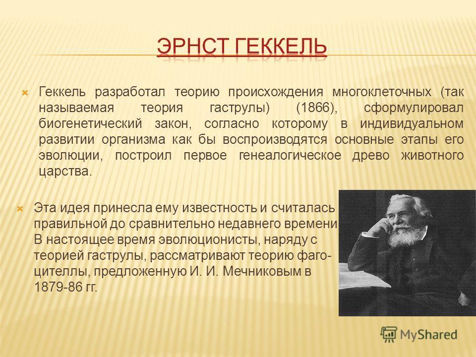 Геккель разработал теорию происхождения многоклеточных (так называемая теория гаструлы) (1866), сформулировал биогенетический закон, согласно которому в индивидуальном развитии организма как бы воспроизводятся основные этапы его эволюции, построил пе