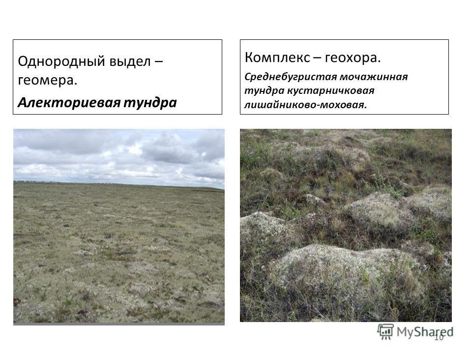 Однородный выдел – геомера. Алекториевая тундра Комплекс – геохора. Среднебугристая мочажинная тундра кустарничковая лишайниково-моховая. 10