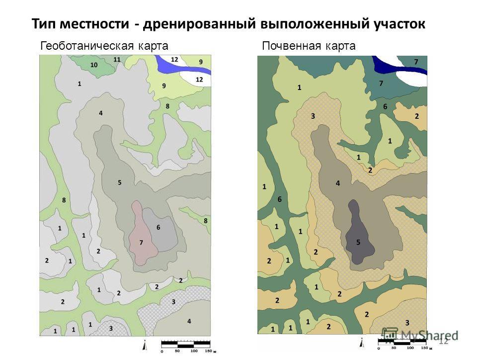 Тип местности - дренированный выположенный участок 12 Геоботаническая картаПочвенная карта