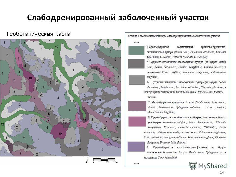 Слабодренированный заболоченный участок 14 Геоботаническая карта