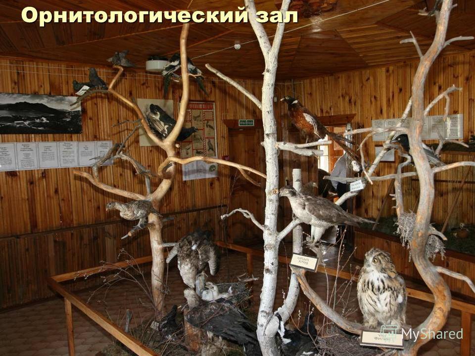 Орнитологический зал
