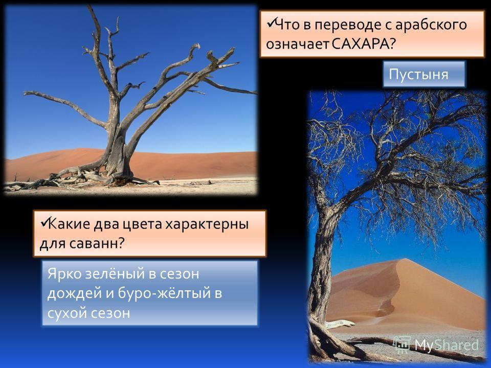 Какие два цвета характерны для саванн? Ярко зелёный в сезон дождей и буро-жёлтый в сухой сезон Что в переводе с арабского означает САХАРА? Пустыня