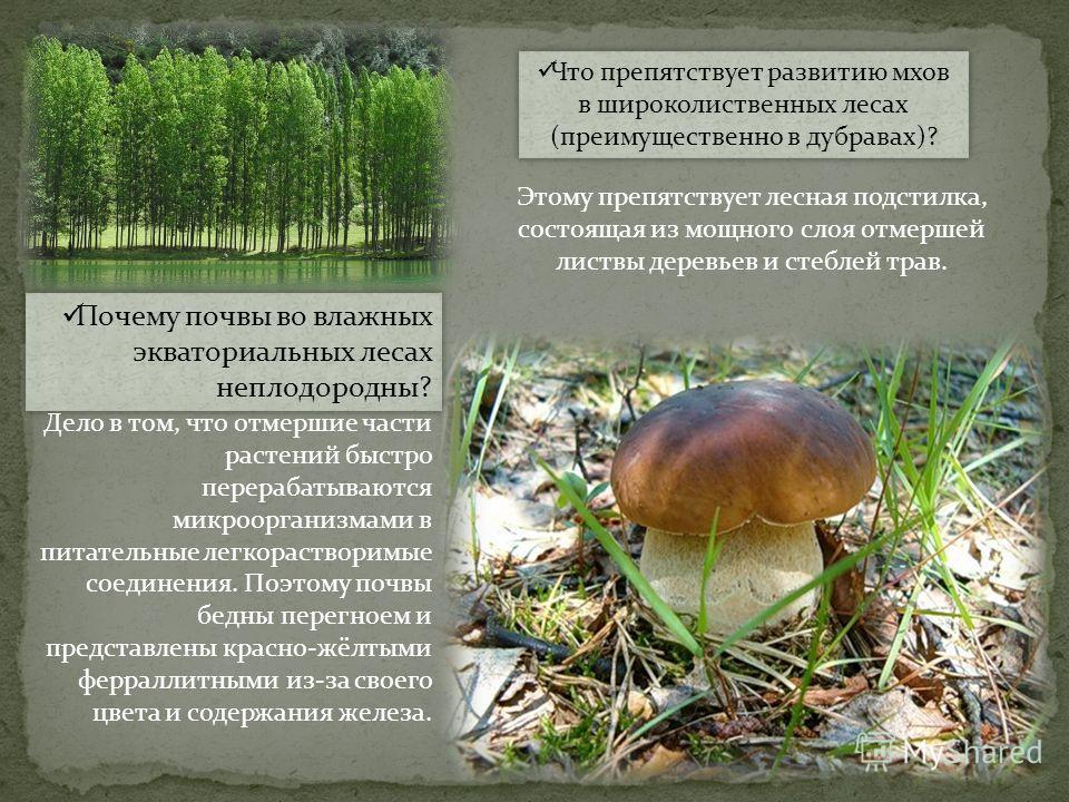 Почему почвы во влажных экваториальных лесах неплодородны? Дело в том, что отмершие части растений быстро перерабатываются микроорганизмами в питательные легкорастворимые соединения. Поэтому почвы бедны перегноем и представлены красно-жёлтыми ферралл