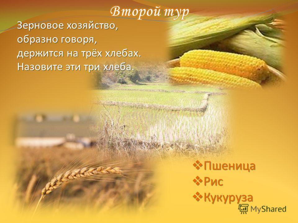 Пшеница Пшеница Рис Рис Кукуруза Кукуруза Зерновое хозяйство, образно говоря, держится на трёх хлебах. Назовите эти три хлеба.