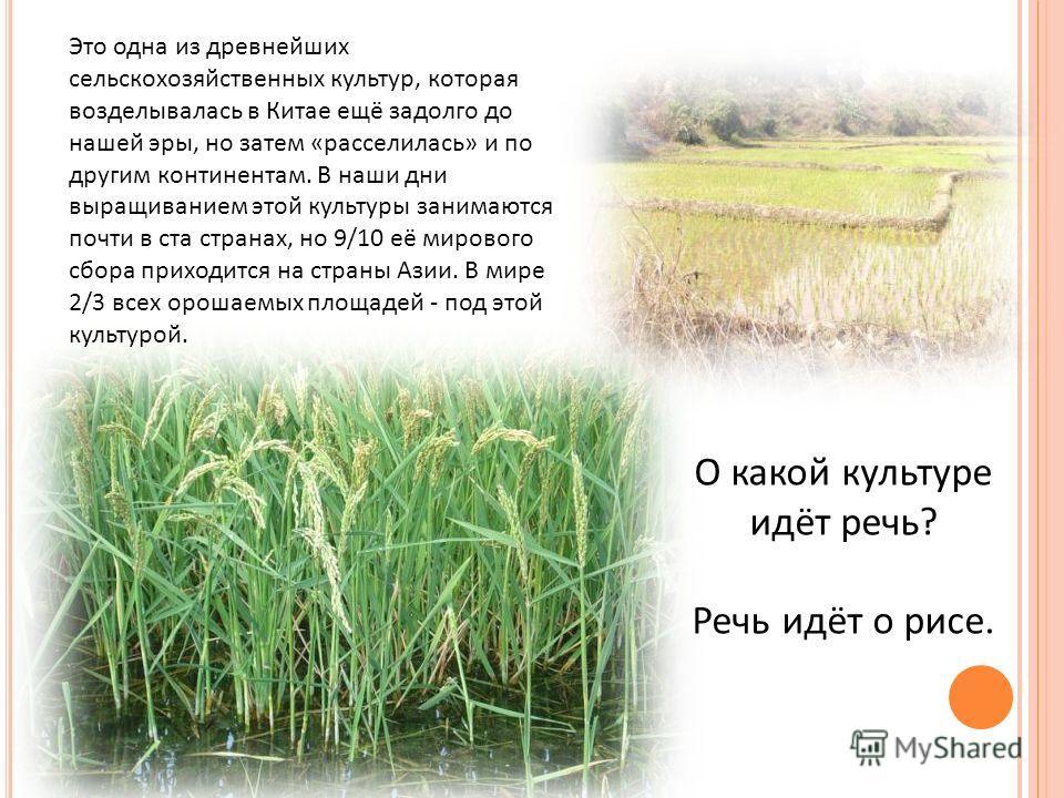 Это одна из древнейших сельскохозяйственных культур, которая возделывалась в Китае ещё задолго до нашей эры, но затем «расселилась» и по другим континентам. В наши дни выращиванием этой культуры занимаются почти в ста странах, но 9/10 её мирового сбо
