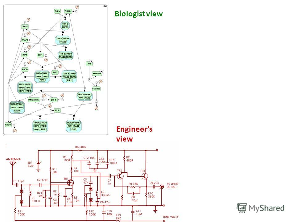 Biologist view Engineers view