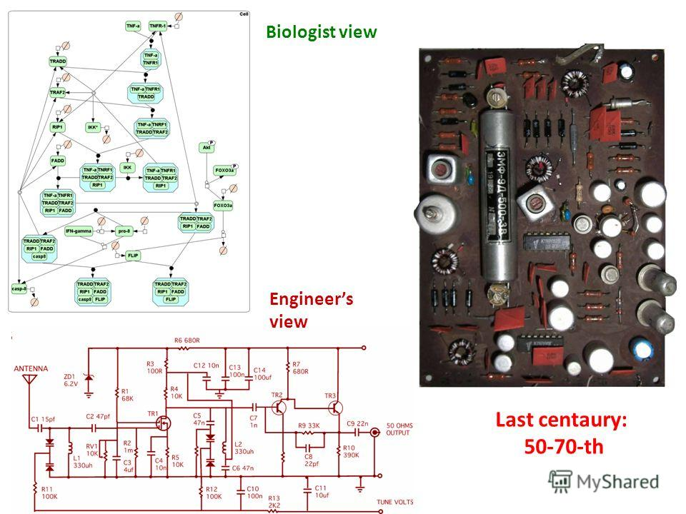 Biologist view Engineers view Last centaury: 50-70-th