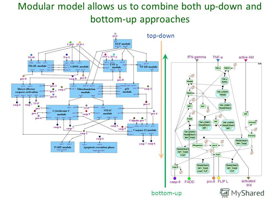 top-down Modular model allows us to combine both up-down and bottom-up approaches bottom-up