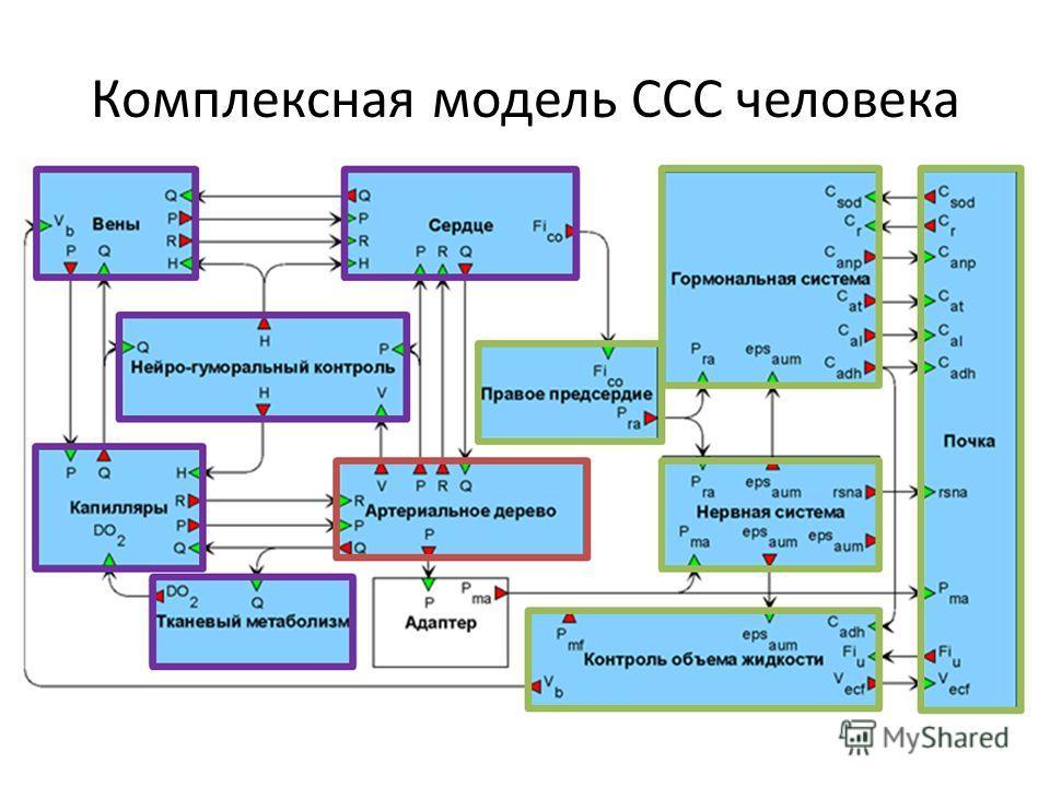 Комплексная модель ССС человека
