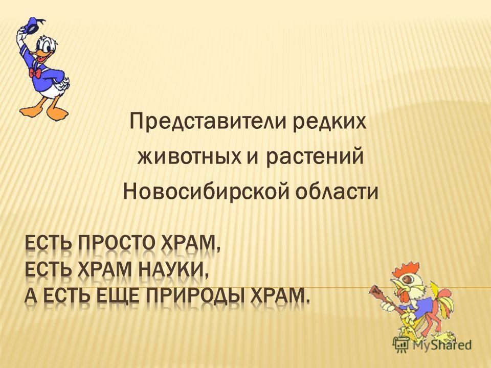 Представители редких животных и растений Новосибирской области